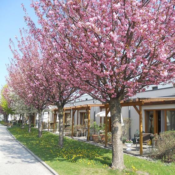 Ansicht Wd Donaustadt 560x560px